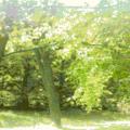 冬から春に目がかゆい方へ(part1)